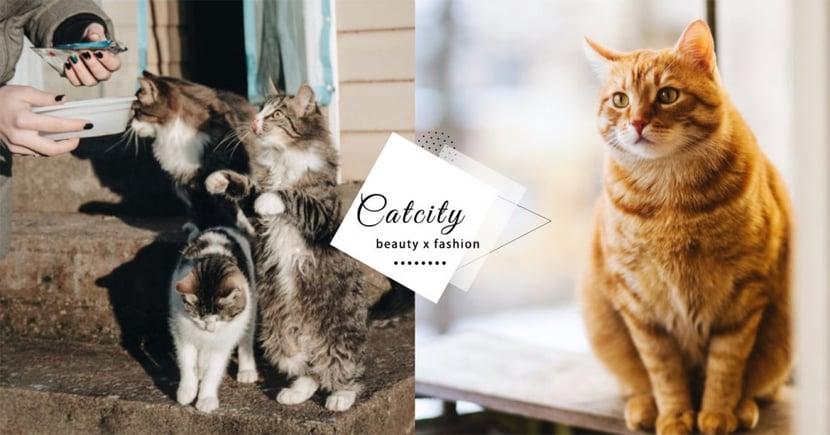【腎貓照顧】腎貓怎麼照料?居家護理 5 大原則,定時吃藥外更重要的事!