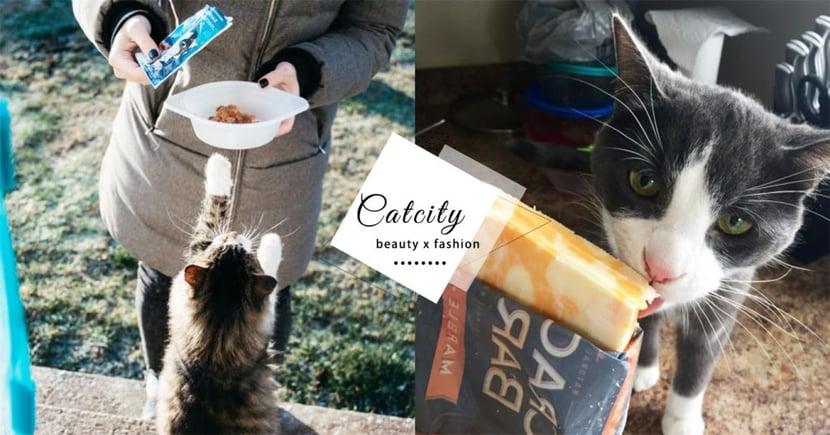 【新手養貓】貓零食推薦!網路爆夯7大「貓零食排行」,絕對讓主子吃得美味又健康!