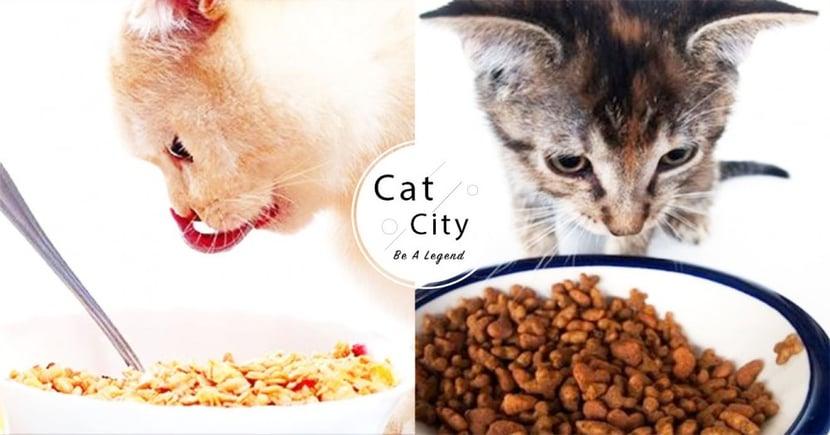 【貓飼料選擇】乾糧、濕食、生食比較!有何不同?哪種對貓最好?