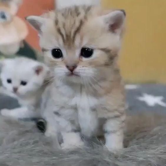 貓咪拉肚子原因