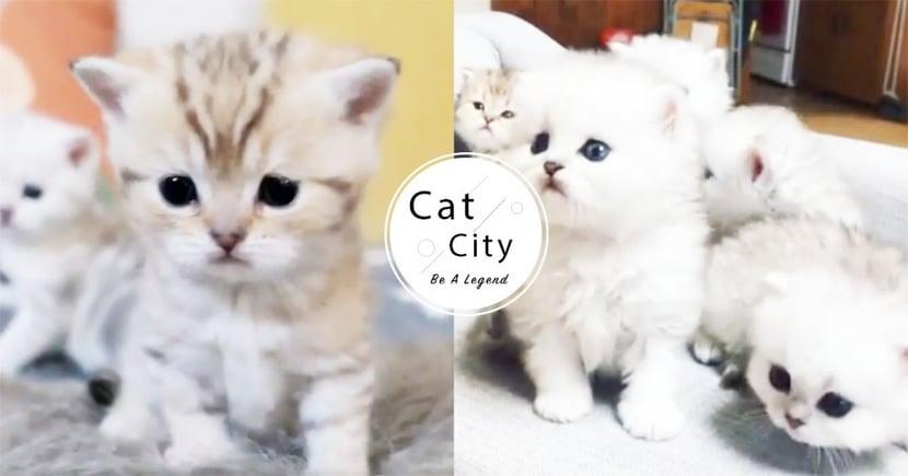 【幼貓照顧】小貓拉肚子怎麼辦?了解腹瀉的 3 大原因與預防方法!