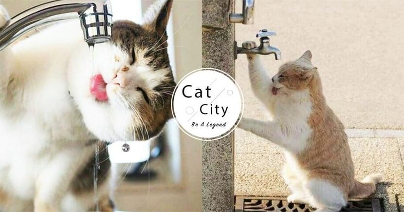 【貓咪喝水量】成貓一天喝多少水?一文教你計算每日所需水量!