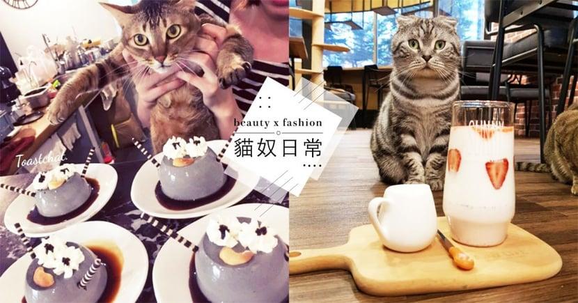 小編精選 !台北 5 家「高CP值貓咖啡廳」,超好吃餐點+喵店員肥美肚肚任摸超療癒~