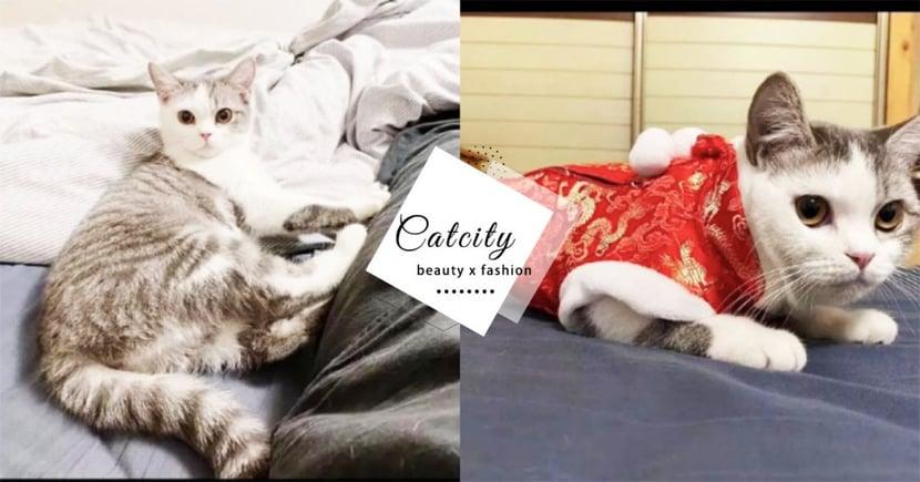 【武漢肺炎】江蘇飼主疑染「武漢肺炎」被隔離,愛貓竟慘遭社區活埋!