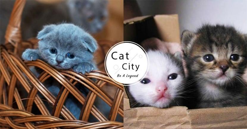 【幼貓照顧】小貓如何餵奶、催便?事前必備用品?貓奴注意須知!