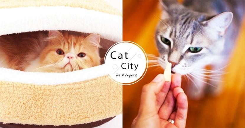 【新手養貓準備】新手貓奴懶人包!必備 8 種寵物用品,讓你第一次養貓就上手~