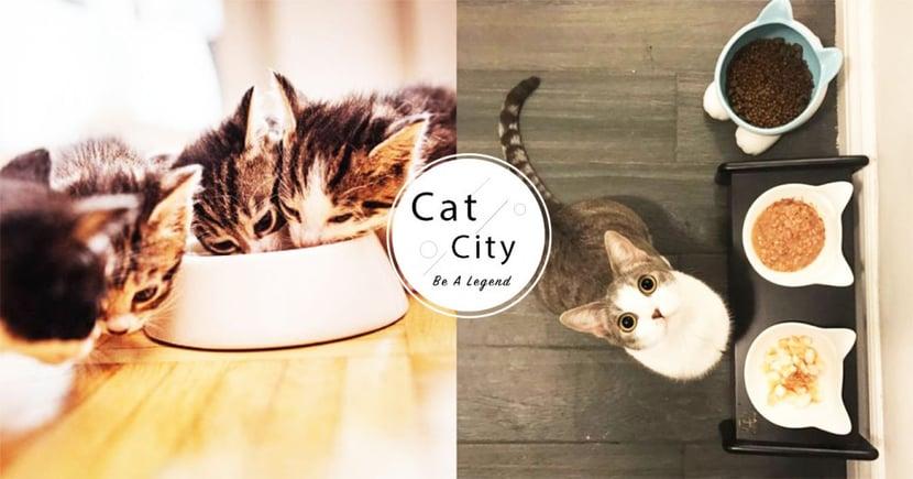 【貓不喝水】網推爆「肉泥法」!貓奴 8 大妙招,絕對讓主子喝水量激升70%!