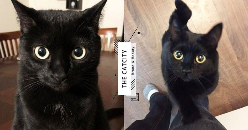 【米克斯】黑貓個性 7 大分析!最「塞奶、聰明」根本極品