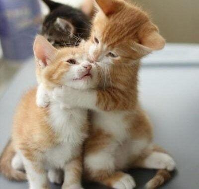 貓咪認養流程