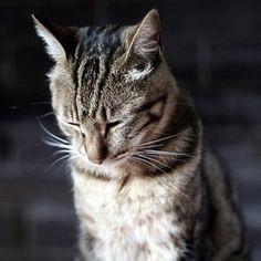貓咪感冒症狀