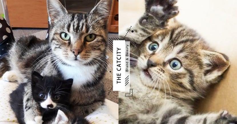 【貓咪呼嚕】呼嚕=開心?貓行為學家認為有「 4 種含義」:與自我安慰有關