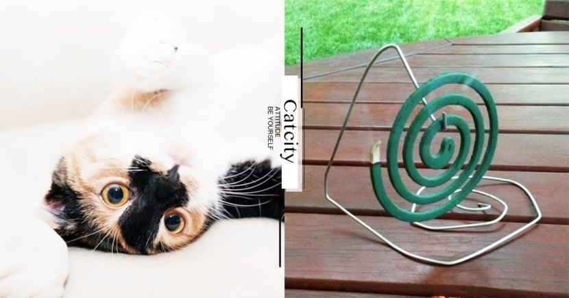【對貓有毒物】蚊香、防瞞洗衣精殺死貓?「除蟲菊」是罪魁禍首!