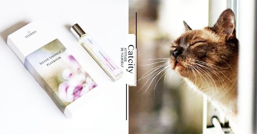 【對貓有毒精油】貓聞到精油會中毒?一文了解 4 大有害列表!