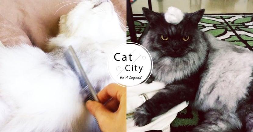 【貓咪換毛季】滿屋貓毛清都清不完? 4 種方法教你輕鬆去除!