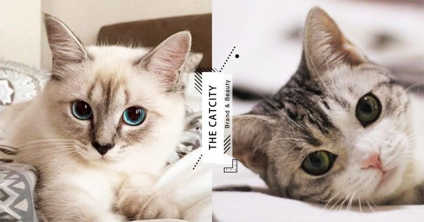 【貓咪走失】剪刀法真有效?成功找回貓「神秘 3 大法」,貓奴試過都說神!