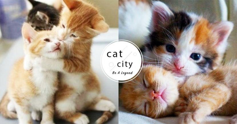 【貓咪認養台北】想領養貓去哪找?北部地區認養網站總整理!