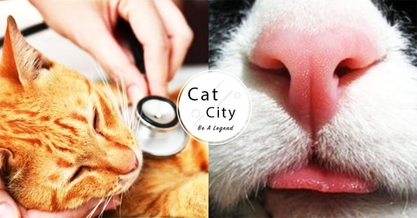 【貓咪感冒症狀】天氣轉換易生病 一文了解貓咪 7 大感冒徵兆!
