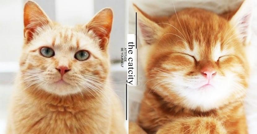 【米克斯】橘貓個性 7 大分析!其中「吃貨+胖呆」特質最討喜