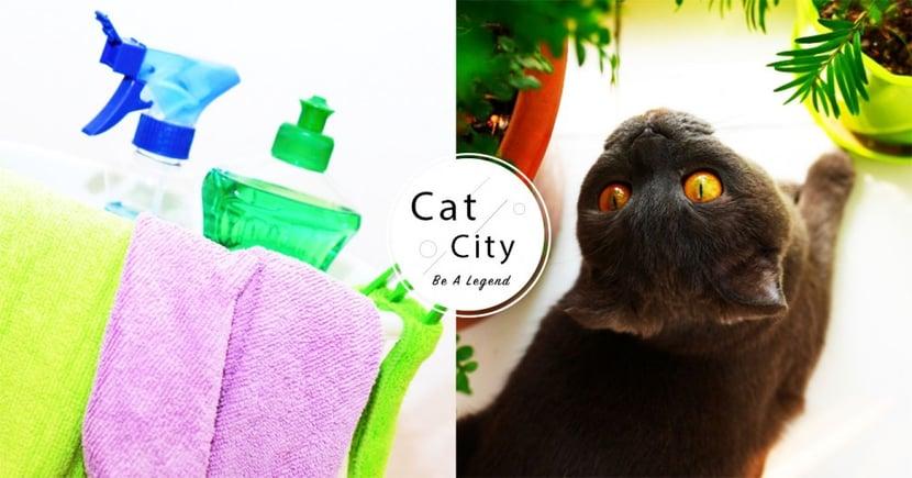 【武漢肺炎】滴露讓貓狗中毒?一文了解寵物居家清潔 3 大重點!