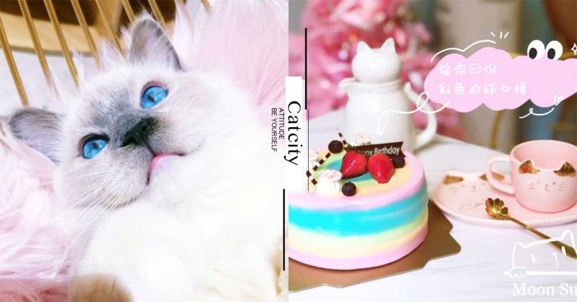 【台北貓咖啡廳】被布偶貓圍繞!超夢幻粉紅系貓咖啡廳,宛如童話般浪漫風格絕對讓少女瘋狂!