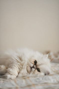 貓咪知識, 貓焦慮症, 貓過度舔毛