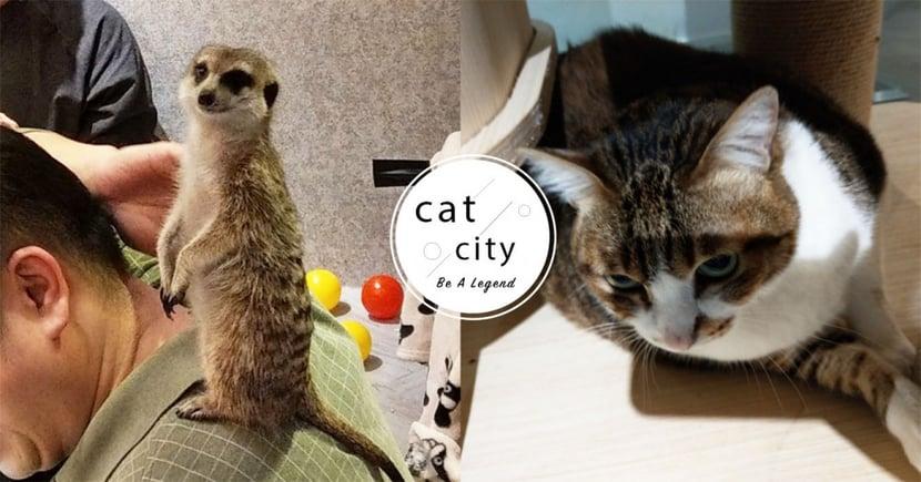 【台北貓咖啡廳】來找貓貓和丁滿吧!「肉球森林」超舒壓,讓滿滿可愛動物療癒你!