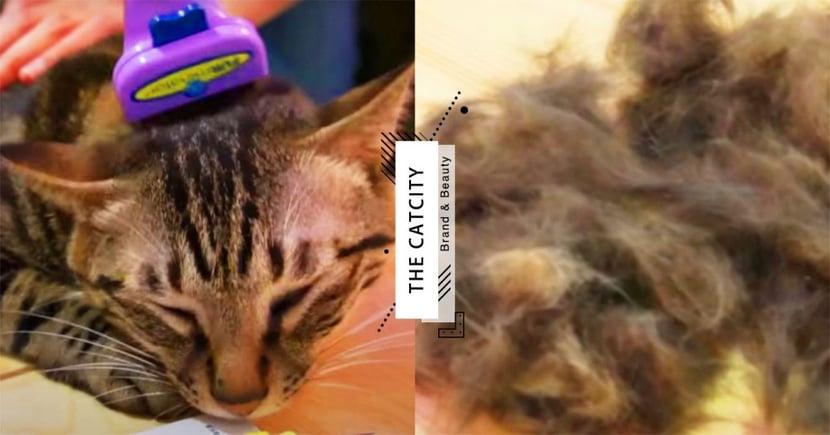 【貓毛梳推薦】Youtuber實測TOP4!抓毛力強,好梳又不飛毛,貓奴絕對要有的梳毛神器!