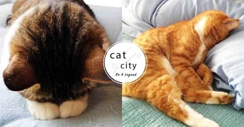 【貓咪過度舔毛】舔到禿毛怎麼辦?影響貓咪過度焦慮的 4 種原因!