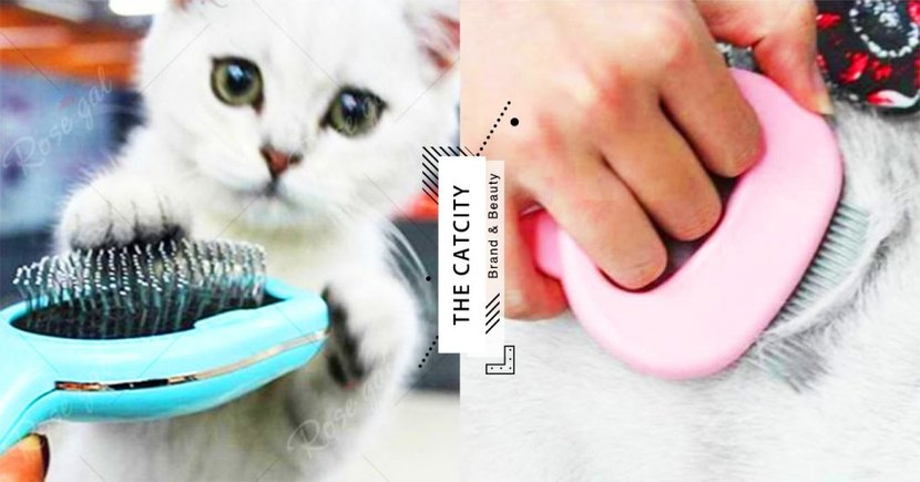 【換毛季梳子怎麼選】6 款貓毛梳基本介紹,原來長毛、短毛貓用的梳子大不同!