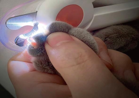 剪指甲,貓咪,新手貓奴