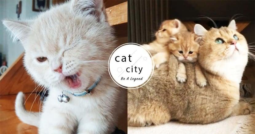 【新手貓奴】該養大貓、小貓?兩者特點比較,身為新手貓奴必知的事!