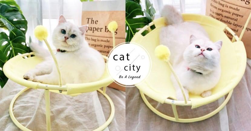 詢問度爆表!超可愛「寵物涼椅睡窩」網路爆紅,躺一整天也不悶熱啦~