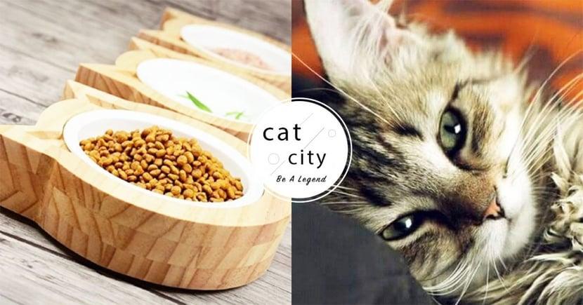 乾飼料不適合當主食!貓奴解析 4 種原因,吃多小心肥胖、糖尿病找上門!