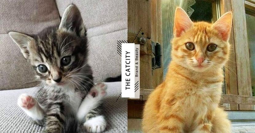 【貓咪領養台中】認養貓咪管道去哪找?台中地區領養網站總整理!