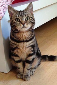 貓行為與心理,貓咪裝傻