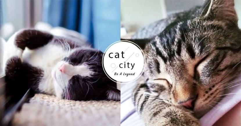 【貓中暑】怕貓中暑?防貓熱衰竭 5 大招,幫貓散熱的最佳方法!