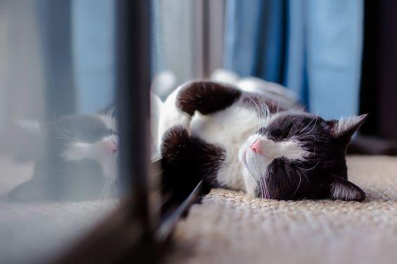 防貓中暑,貓咪,幫貓散熱