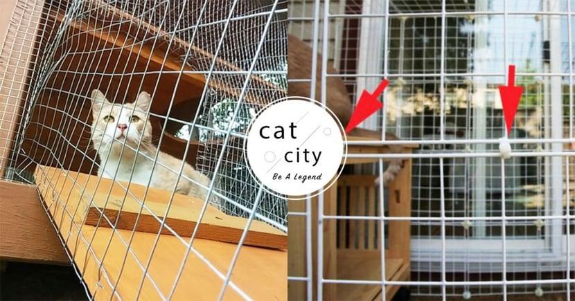 【貓窗網】防貓墜樓!3 個「窗網安裝教學」,養貓人家必備家居裝置!