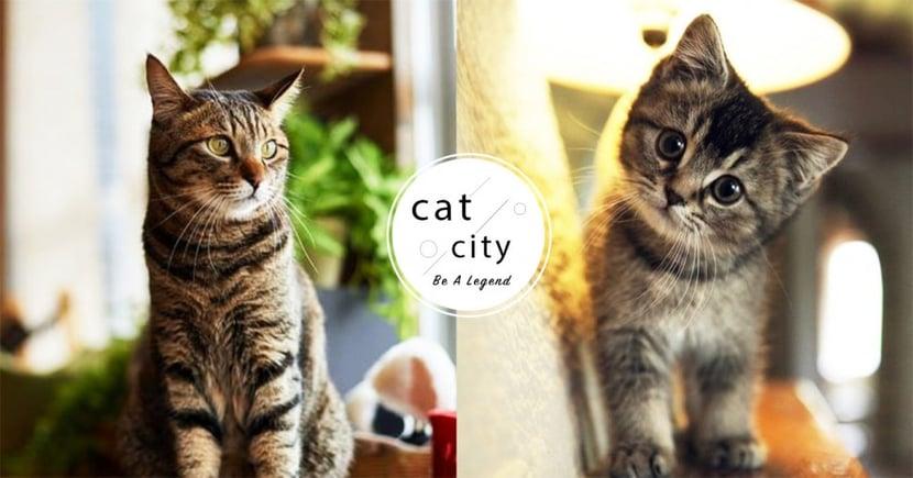 【貓咪冷知識】貓咪是否會嘲笑主人?科學研究發現:貓其實不懂笑!