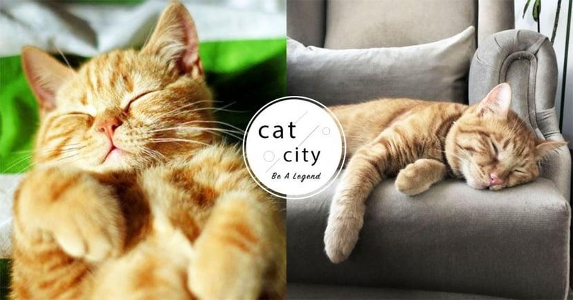 【貓咪冷知識】貓咪會做夢嗎?科學研究證實:「牠們也會有夢境!」