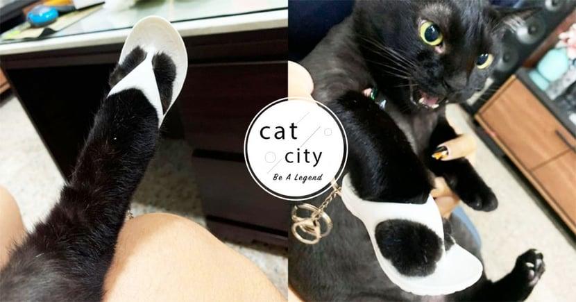 黑貓試穿「贈品小白拖」,大露修長美腿爆紅 網笑翻:忘記除毛了!