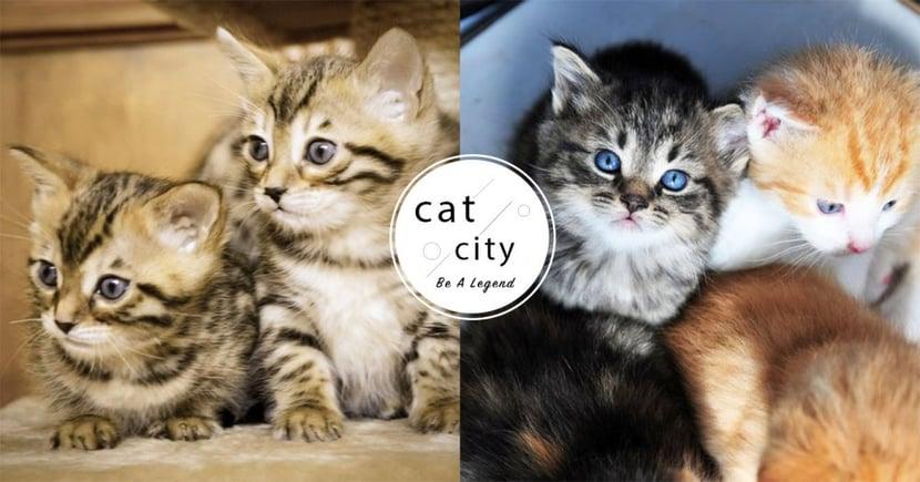 【貓瘟症狀】致死率高達75%!關於感染貓瘟的 5 大症狀,貓奴必知!