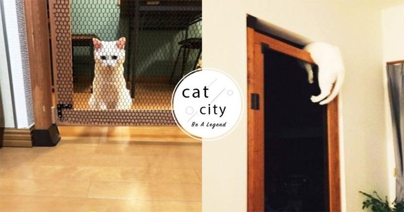 推特熱議!日本白貓破解防貓門,超狂「倒頭栽」破解法 網笑噴:生命會找到出路