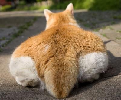 麒麟尾,貓咪