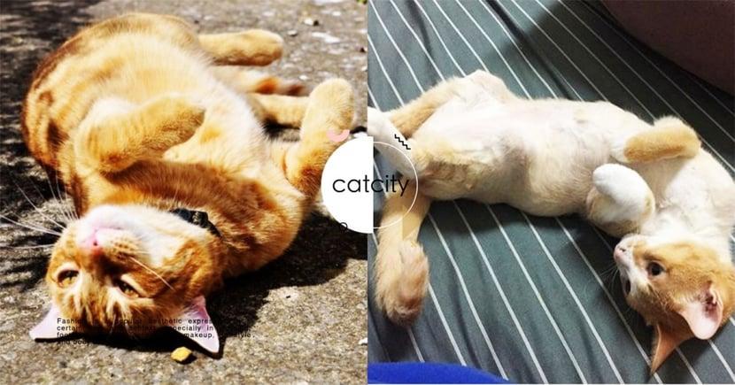【貓該不該剃毛】貓全身剃光有助消暑?關於剃毛你需要了解的 4 件事!