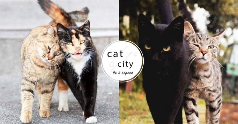 【養新貓要注意】避免直接接觸!新舊貓隔離 5 大注意事項