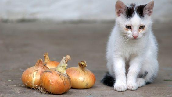 貓不能吃的食物, 貓咪毒藥, 貓咪禁食