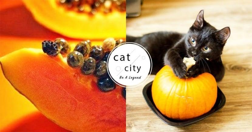 【貓咪可吃的人類食物】這些食材能餵貓? 10 種「人類食物」貓也能安心吃!