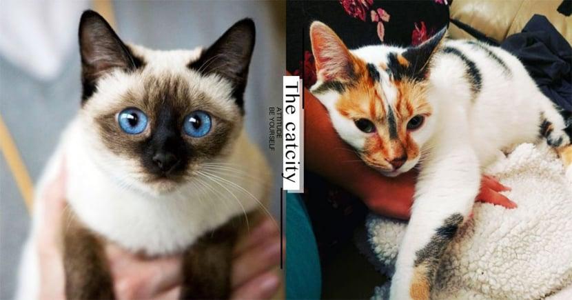 【貓咪行為】假裝冷漠只是傲嬌?了解貓「表達喜歡」的 8 種舉動!