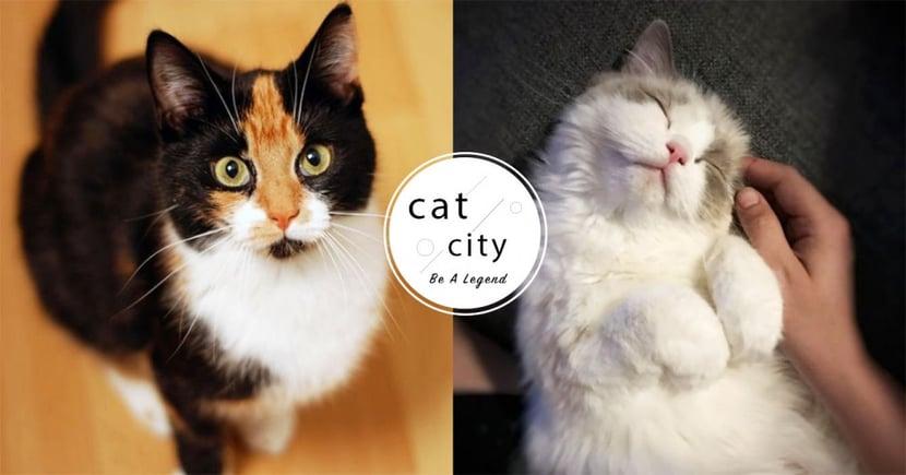 【貓咪冷知識】貓對人有依附情感嗎?美國研究:「主人是貓咪的安全堡壘」